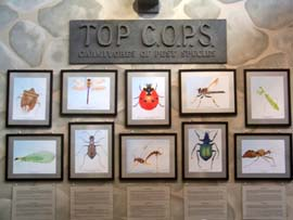 Top Cops of the Insect World