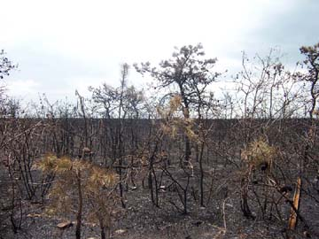 A May 2007 forest fire destroyed over 18,000 acres, but there were no injuries thanks to the expertise of local and state firefighters