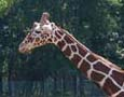 Cape May County Park and Zoo is a wonderful place for everyone - a must-see!