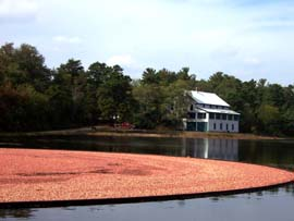 The old cranberry packing house at Double Trouble State Park in Bayville, NJ provides a scenic backdrop for the October cranberry harvest.