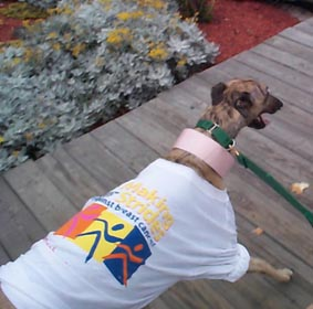 Max trots along the Point Pleasant Boardwalk, happily showing his new shirt off!