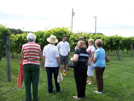 Visitors to Valenzano Winery get a personal vineyard tour given by Anthony Valenzano. Piine Barrens Winery Tour is run by PineyPower Tours.